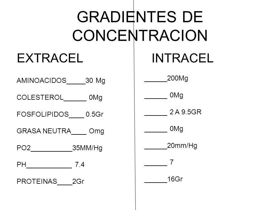 GRADIENTES DE CONCENTRACION EXTRACEL INTRACEL AMINOACIDOS_____30 Mg COLESTEROL______ 0Mg FOSFOLIPIDOS____ 0.5Gr GRASA NEUTRA____ Omg PO2___________35MM/Hg PH____________ 7.4 PROTEINAS____2Gr ______200Mg ______ 0Mg ______ 2 A 9.5GR ______ 0Mg ______20mm/Hg ______ 7 ______16Gr