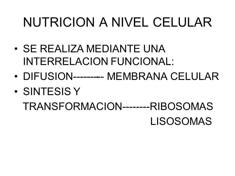 NUTRICION A NIVEL CELULAR SE REALIZA MEDIANTE UNA INTERRELACION FUNCIONAL: DIFUSION--------- MEMBRANA CELULAR SINTESIS Y TRANSFORMACION--------RIBOSOM