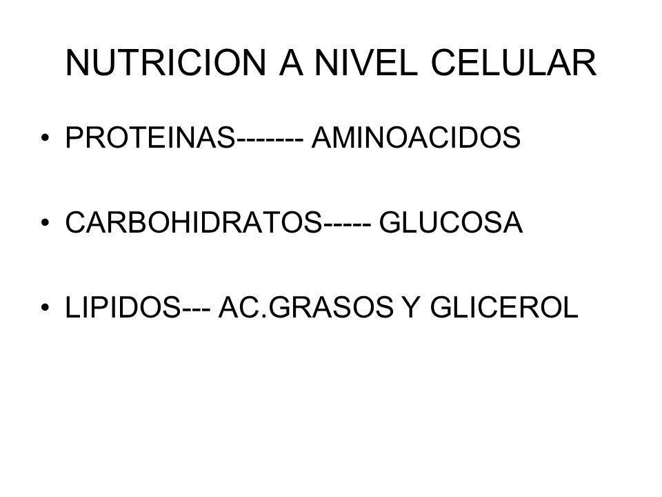 NUTRICION A NIVEL CELULAR PROTEINAS------- AMINOACIDOS CARBOHIDRATOS----- GLUCOSA LIPIDOS--- AC.GRASOS Y GLICEROL