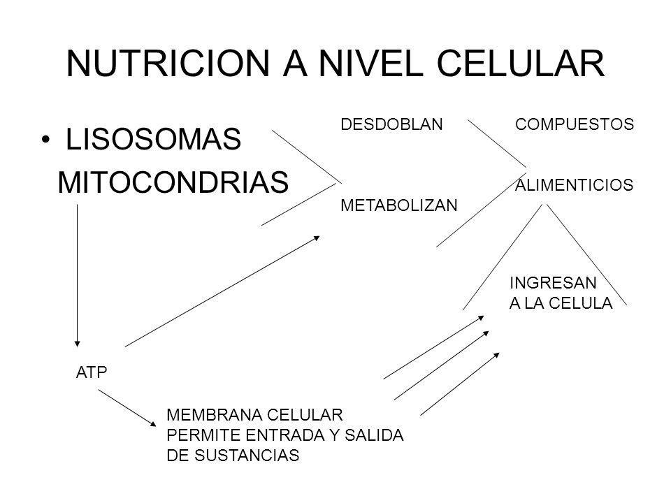 NUTRICION A NIVEL CELULAR LISOSOMAS MITOCONDRIAS DESDOBLAN METABOLIZAN COMPUESTOS ALIMENTICIOS INGRESAN A LA CELULA MEMBRANA CELULAR PERMITE ENTRADA Y
