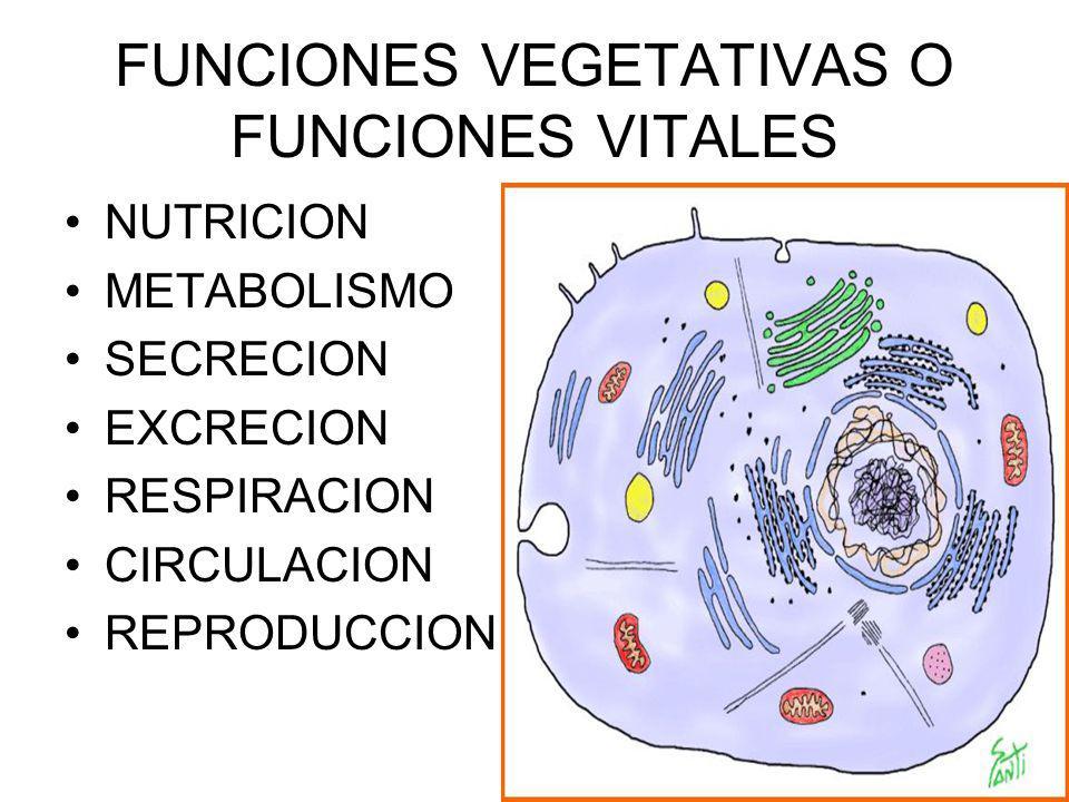FUNCIONES VEGETATIVAS O FUNCIONES VITALES NUTRICION METABOLISMO SECRECION EXCRECION RESPIRACION CIRCULACION REPRODUCCION