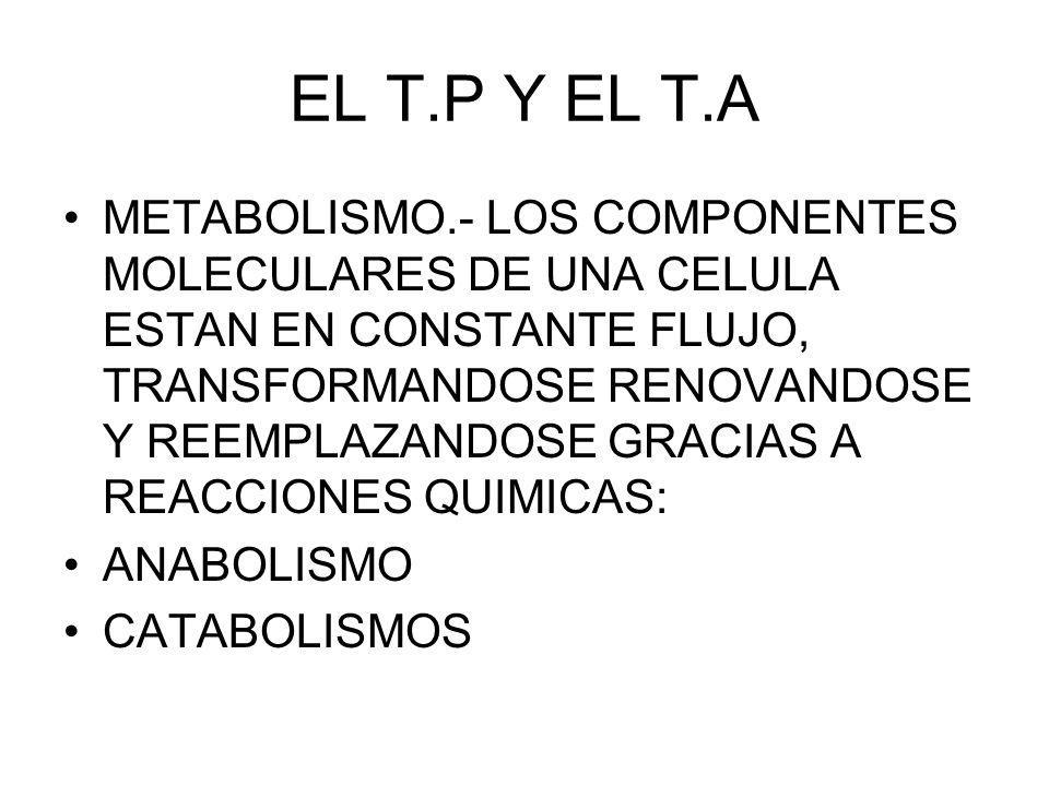 EL T.P Y EL T.A METABOLISMO.- LOS COMPONENTES MOLECULARES DE UNA CELULA ESTAN EN CONSTANTE FLUJO, TRANSFORMANDOSE RENOVANDOSE Y REEMPLAZANDOSE GRACIAS