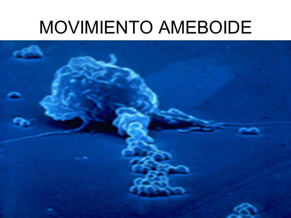 EL T.P Y EL T.A METABOLISMO.- LOS COMPONENTES MOLECULARES DE UNA CELULA ESTAN EN CONSTANTE FLUJO, TRANSFORMANDOSE RENOVANDOSE Y REEMPLAZANDOSE GRACIAS A REACCIONES QUIMICAS: ANABOLISMO CATABOLISMOS