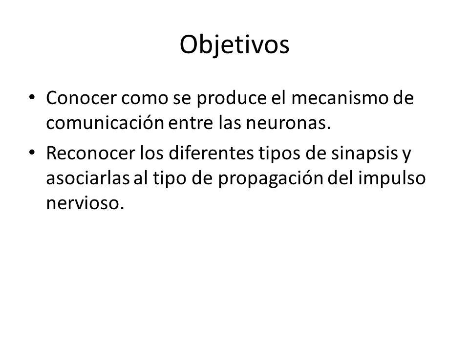 Objetivos Conocer como se produce el mecanismo de comunicación entre las neuronas. Reconocer los diferentes tipos de sinapsis y asociarlas al tipo de