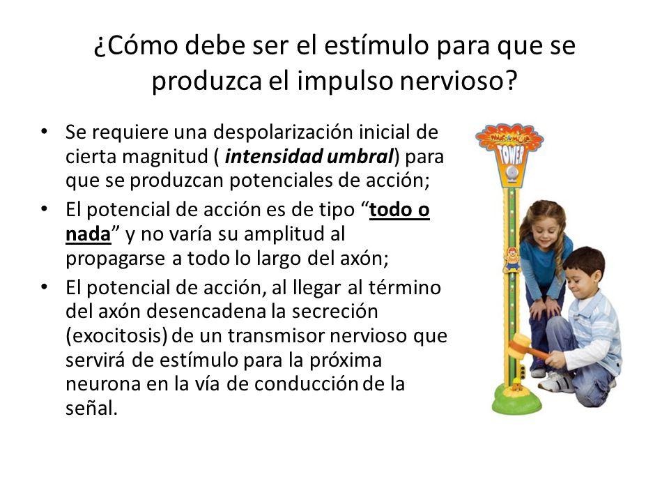 ¿Cómo debe ser el estímulo para que se produzca el impulso nervioso? Se requiere una despolarización inicial de cierta magnitud ( intensidad umbral) p