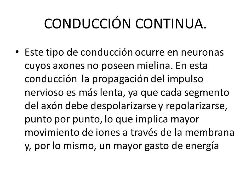 CONDUCCIÓN CONTINUA. Este tipo de conducción ocurre en neuronas cuyos axones no poseen mielina. En esta conducción la propagación del impulso nervioso
