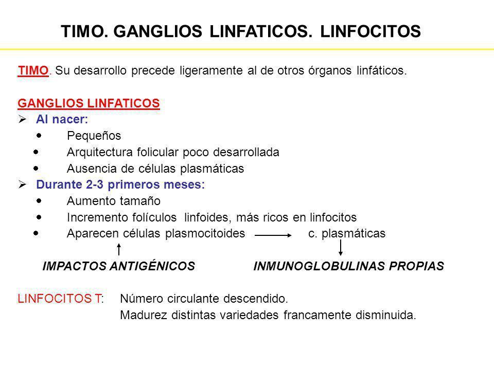 TIMO. GANGLIOS LINFATICOS. LINFOCITOS TIMO. Su desarrollo precede ligeramente al de otros órganos linfáticos. GANGLIOS LINFATICOS Al nacer: Pequeños A