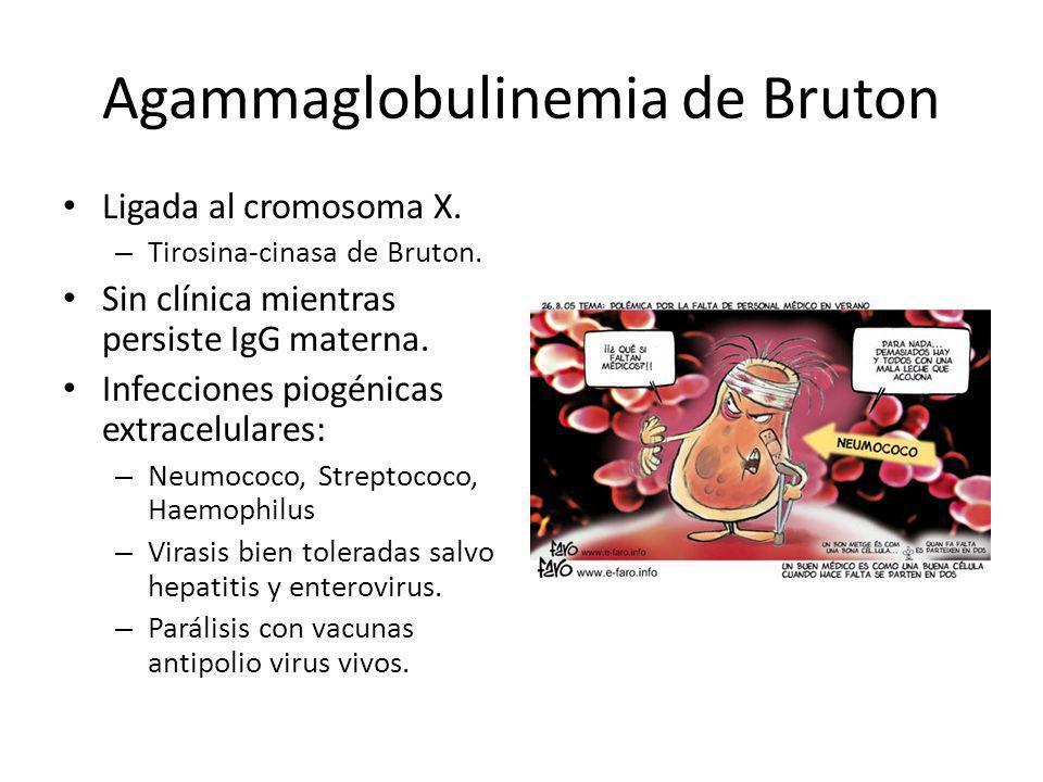 Agammaglobulinemia de Bruton Ligada al cromosoma X. – Tirosina-cinasa de Bruton. Sin clínica mientras persiste IgG materna. Infecciones piogénicas ext