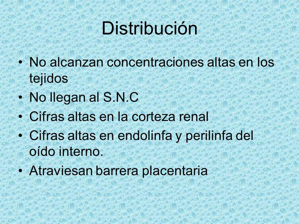 Distribución No alcanzan concentraciones altas en los tejidos No llegan al S.N.C Cifras altas en la corteza renal Cifras altas en endolinfa y perilinf