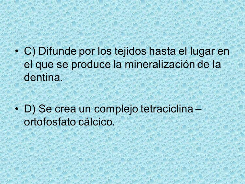 C) Difunde por los tejidos hasta el lugar en el que se produce la mineralización de la dentina. D) Se crea un complejo tetraciclina – ortofosfato cálc