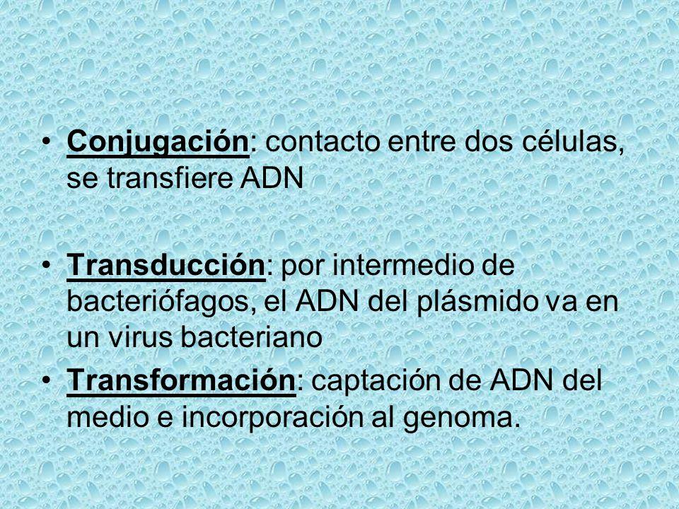 Conjugación: contacto entre dos células, se transfiere ADN Transducción: por intermedio de bacteriófagos, el ADN del plásmido va en un virus bacterian