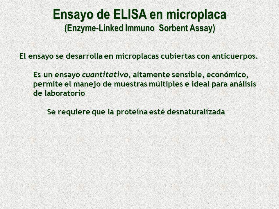 Ensayo de ELISA en microplaca (Enzyme-Linked Immuno Sorbent Assay) El ensayo se desarrolla en microplacas cubiertas con anticuerpos. Es un ensayo cuan