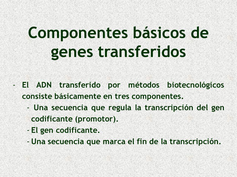 Componentes básicos de genes transferidos - -El ADN transferido por métodos biotecnológicos consiste básicamente en tres componentes. - - Una secuenci