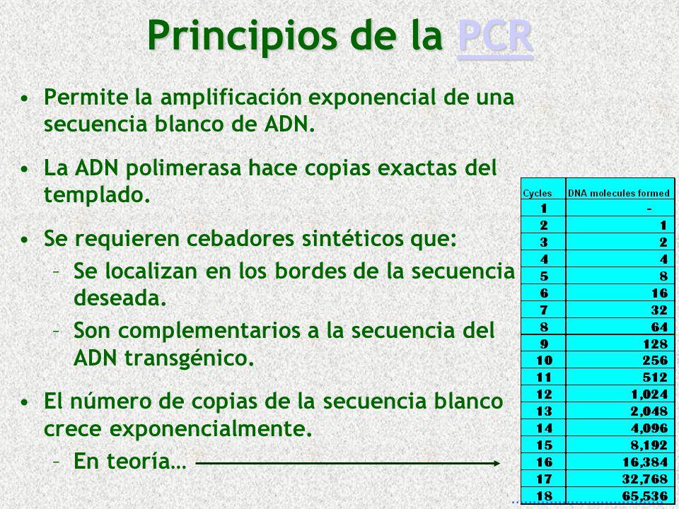 Principios de la PCR PCR Permite la amplificación exponencial de una secuencia blanco de ADN. La ADN polimerasa hace copias exactas del templado. Se r