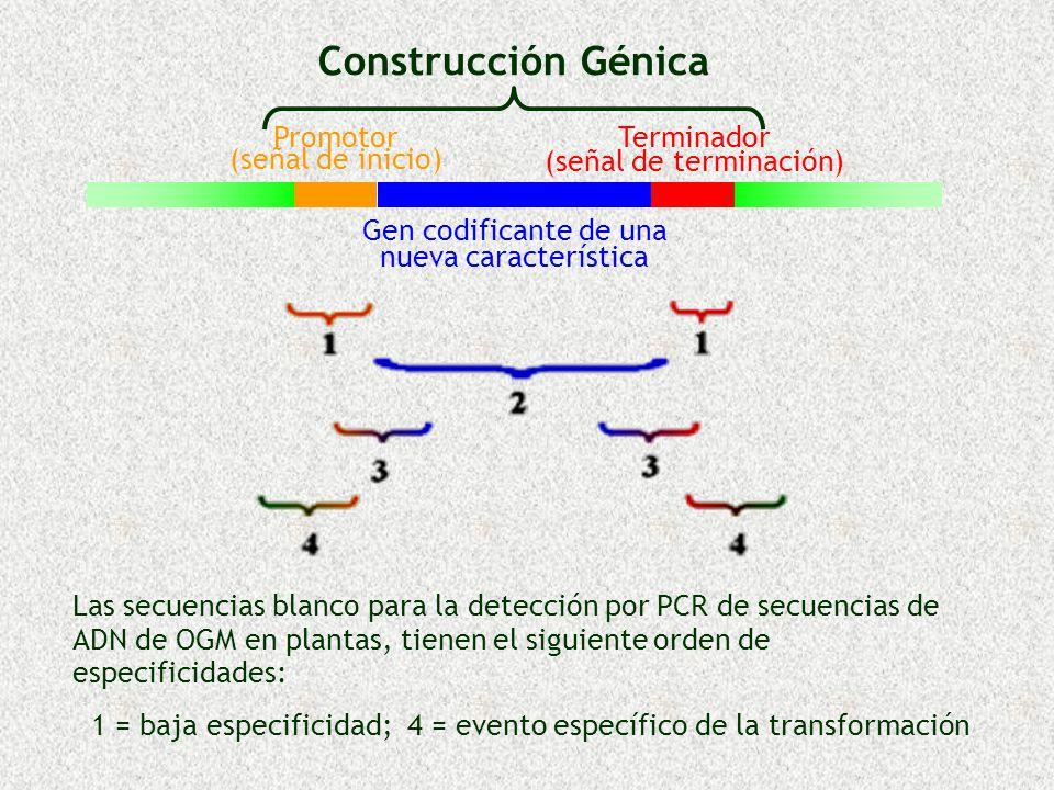 Construcción Génica Promotor (señal de inicio) Terminador (señal de terminación) Gen codificante de una nueva característica Las secuencias blanco par
