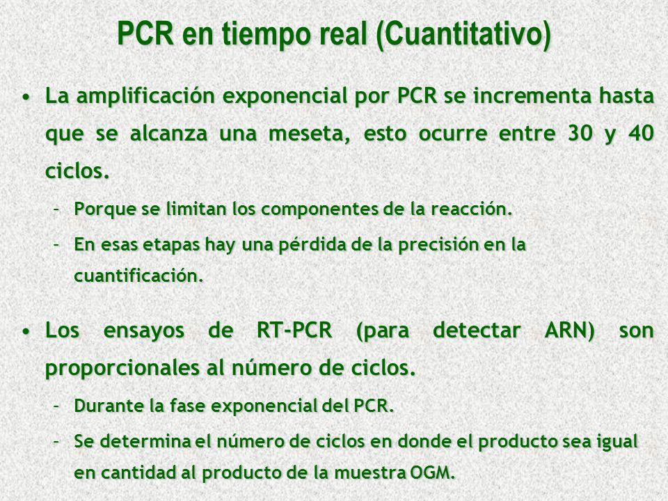 La amplificación exponencial por PCR se incrementa hasta que se alcanza una meseta, esto ocurre entre 30 y 40 ciclos.La amplificación exponencial por
