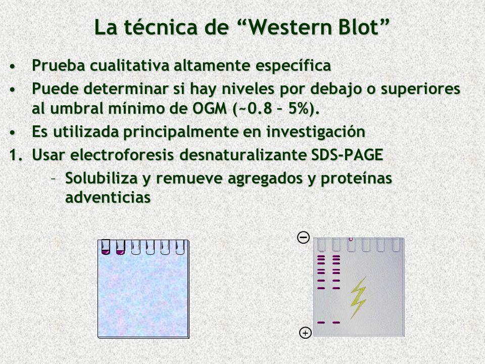 La técnica de Western Blot Prueba cualitativa altamente específicaPrueba cualitativa altamente específica Puede determinar si hay niveles por debajo o