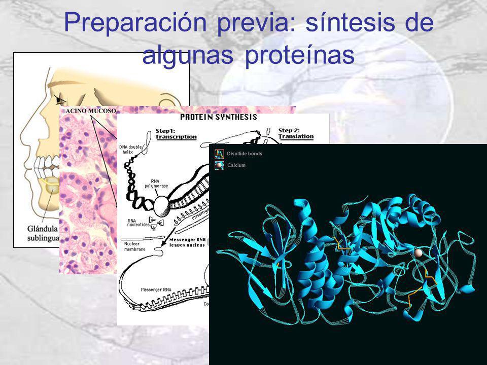 Preparación previa: síntesis de algunas proteínas