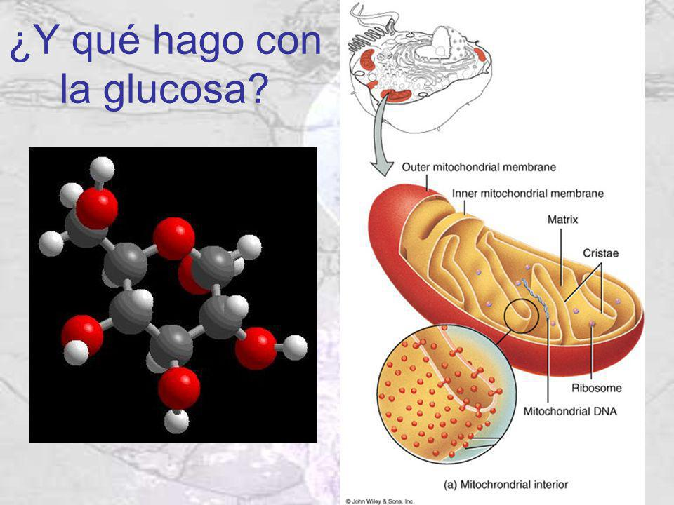 ¿Y qué hago con la glucosa?