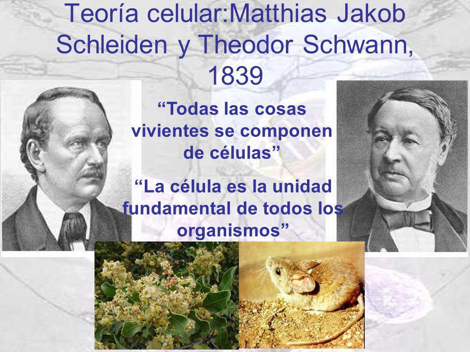 Teoría celular:Matthias Jakob Schleiden y Theodor Schwann, 1839 Todas las cosas vivientes se componen de células La célula es la unidad fundamental de