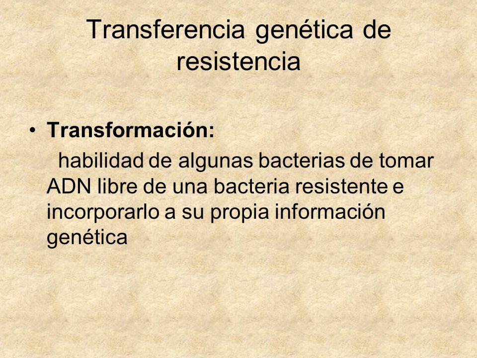 Transferencia genética de resistencia Transformación: habilidad de algunas bacterias de tomar ADN libre de una bacteria resistente e incorporarlo a su