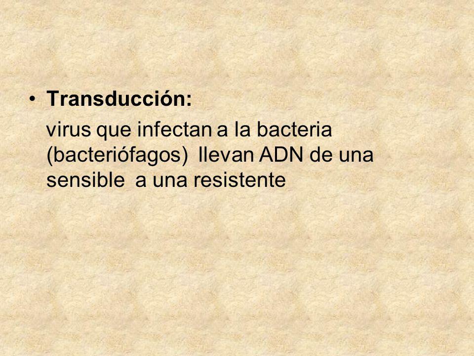 Transducción: virus que infectan a la bacteria (bacteriófagos) llevan ADN de una sensible a una resistente