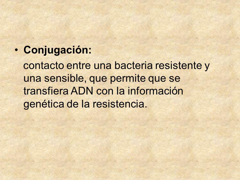 Conjugación: contacto entre una bacteria resistente y una sensible, que permite que se transfiera ADN con la información genética de la resistencia.