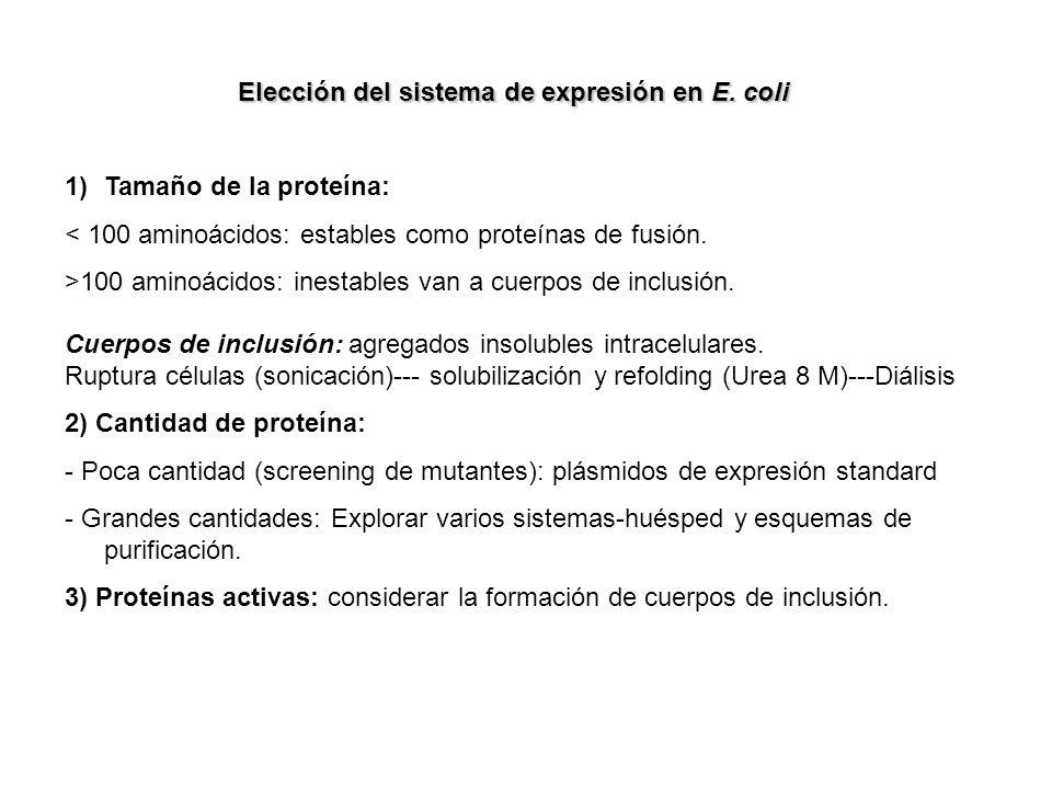 Elección del sistema de expresión en E. coli 1)Tamaño de la proteína: < 100 aminoácidos: estables como proteínas de fusión. >100 aminoácidos: inestabl