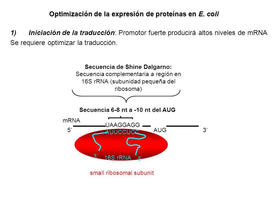 Optimización de la expresión de proteínas en E. coli 1)Iniciación de la traducción: Promotor fuerte producirá altos niveles de mRNA Se requiere optimi