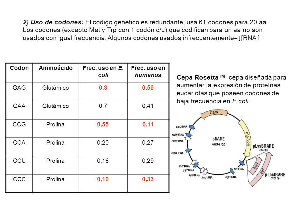 2) Uso de codones: El código genético es redundante, usa 61 codones para 20 aa. Los codones (excepto Met y Trp con 1 codón c/u) que codifican para un