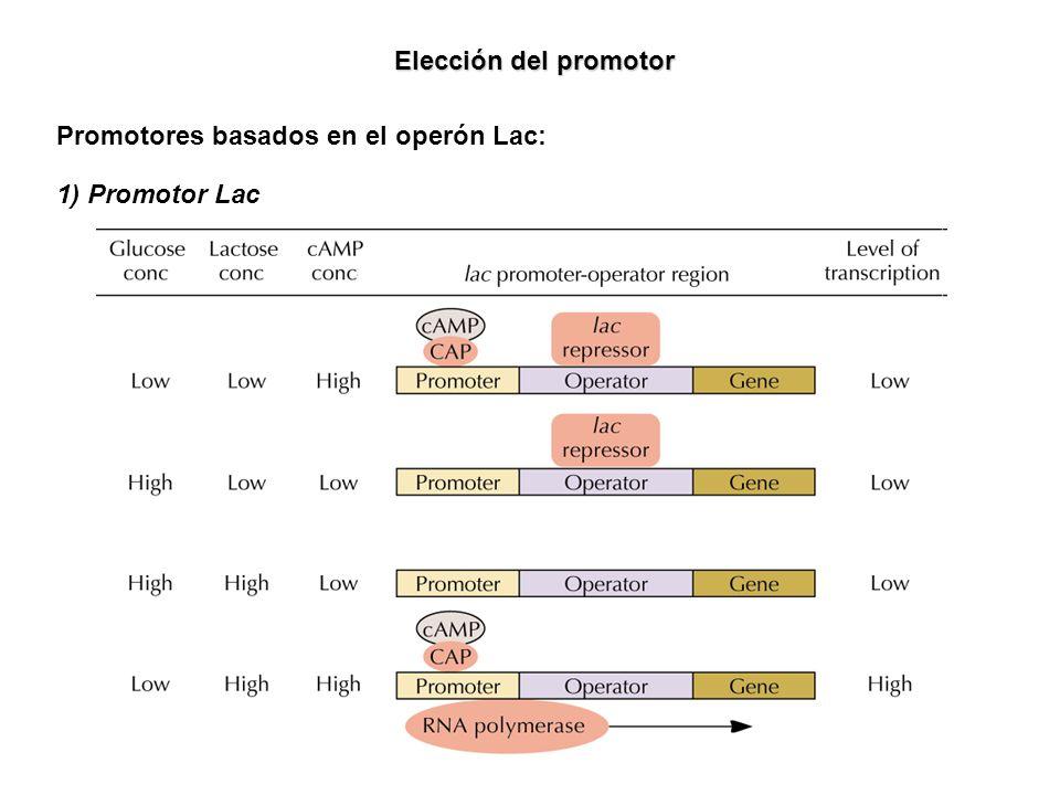 Elección del promotor Promotores basados en el operón Lac: 1) Promotor Lac