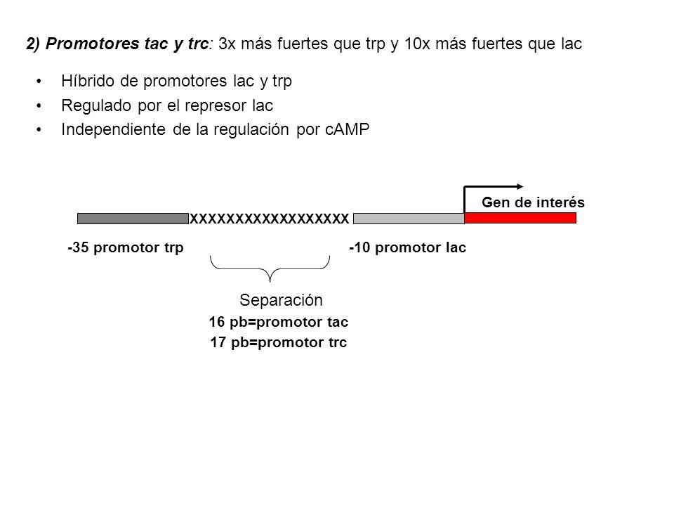2) Promotores tac y trc: 3x más fuertes que trp y 10x más fuertes que lac Híbrido de promotores lac y trp Regulado por el represor lac Independiente d