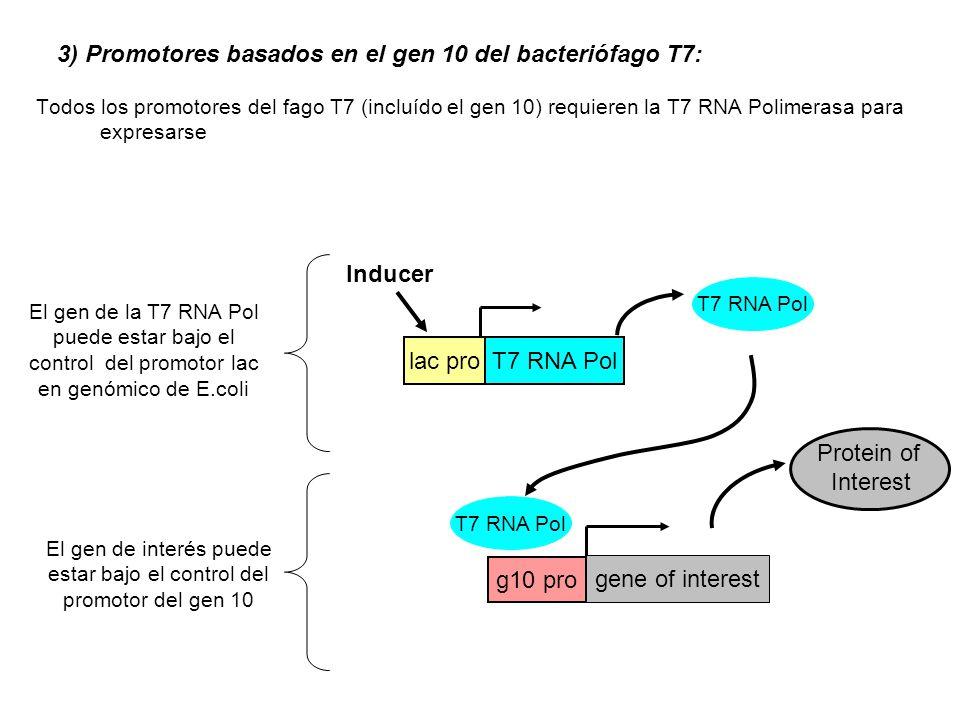 3) Promotores basados en el gen 10 del bacteriófago T7: Todos los promotores del fago T7 (incluído el gen 10) requieren la T7 RNA Polimerasa para expr