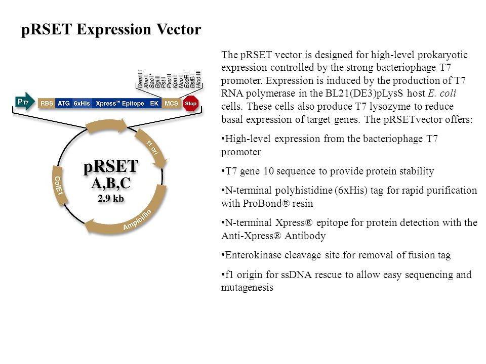 pRSET Expression Vector The pRSET vector is designed for high-level prokaryotic expression controlled by the strong bacteriophage T7 promoter. Express