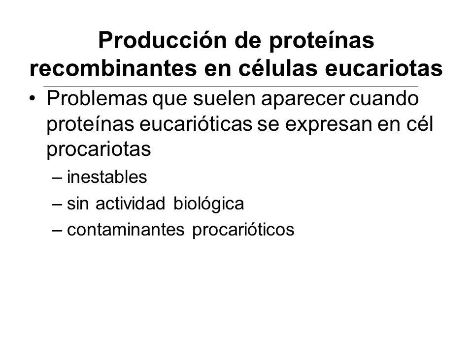 Producción de proteínas recombinantes en células eucariotas Problemas que suelen aparecer cuando proteínas eucarióticas se expresan en cél procariotas