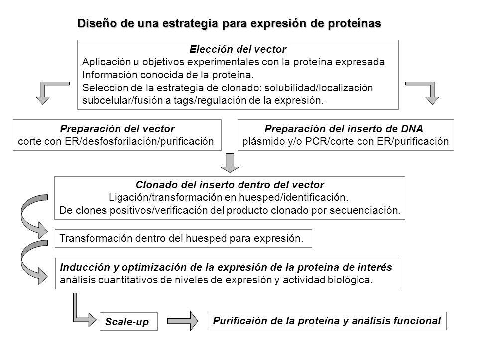 Diseño de una estrategia para expresión de proteínas Elección del vector Aplicación u objetivos experimentales con la proteína expresada Información c