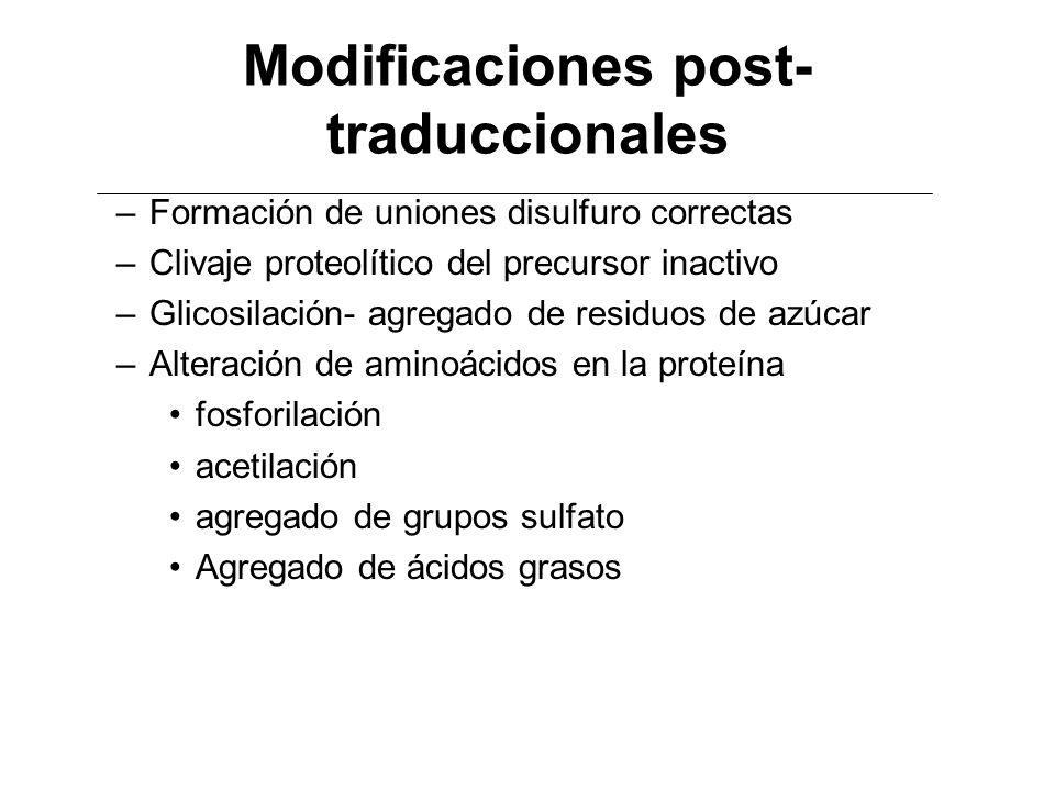 Modificaciones post- traduccionales –Formación de uniones disulfuro correctas –Clivaje proteolítico del precursor inactivo –Glicosilación- agregado de