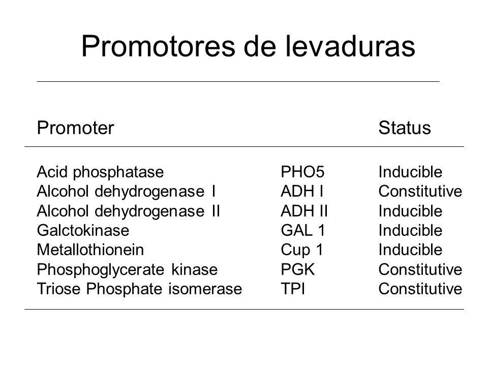 Promotores de levaduras PromoterStatus Acid phosphatasePHO5Inducible Alcohol dehydrogenase IADH IConstitutive Alcohol dehydrogenase IIADH IIInducible