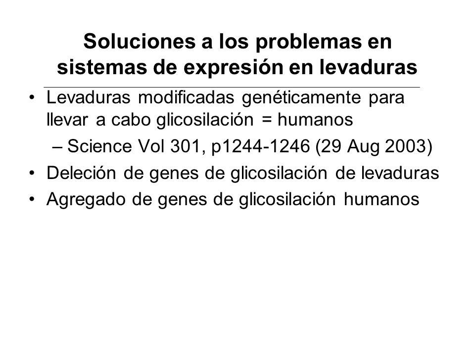 Soluciones a los problemas en sistemas de expresión en levaduras Levaduras modificadas genéticamente para llevar a cabo glicosilación = humanos –Scien