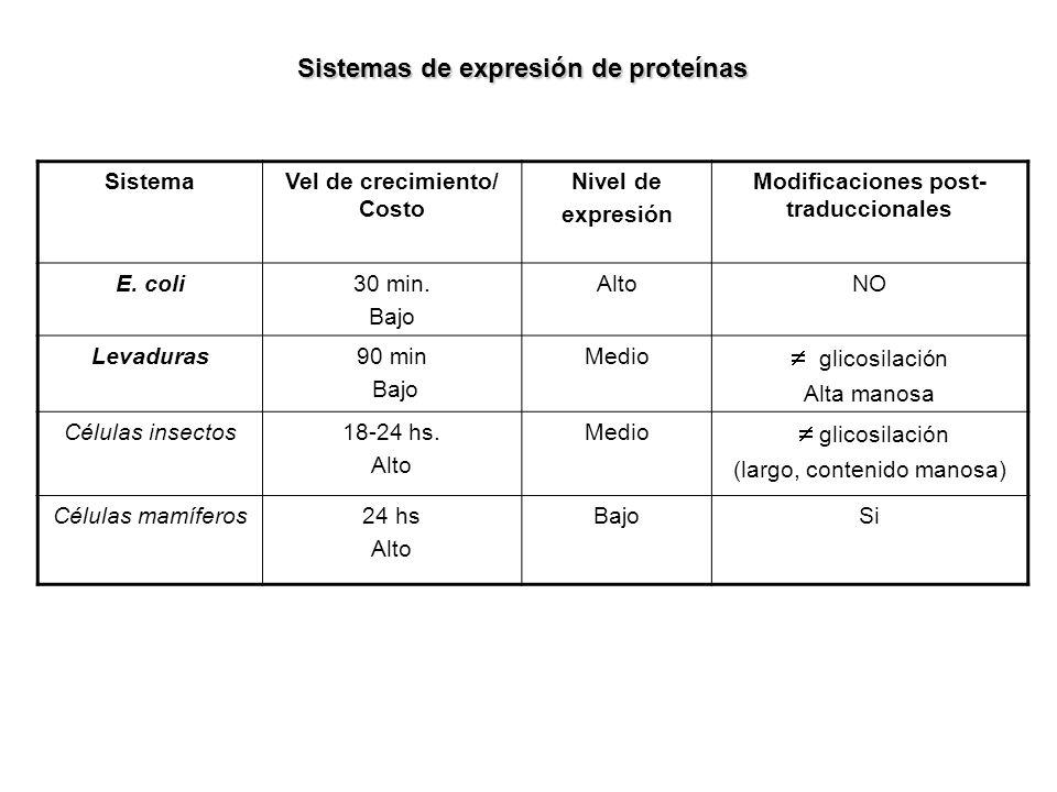 Sistemas de expresión de proteínas SistemaVel de crecimiento/ Costo Nivel de expresión Modificaciones post- traduccionales E. coli30 min. Bajo AltoNO