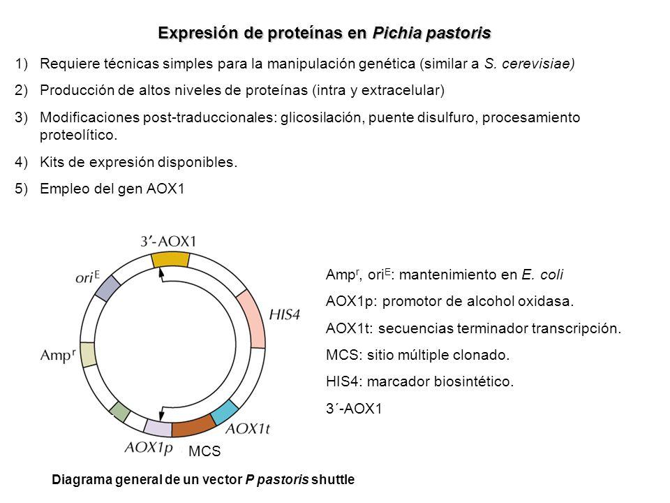 Expresión de proteínas en Pichia pastoris 1)Requiere técnicas simples para la manipulación genética (similar a S. cerevisiae) 2)Producción de altos ni