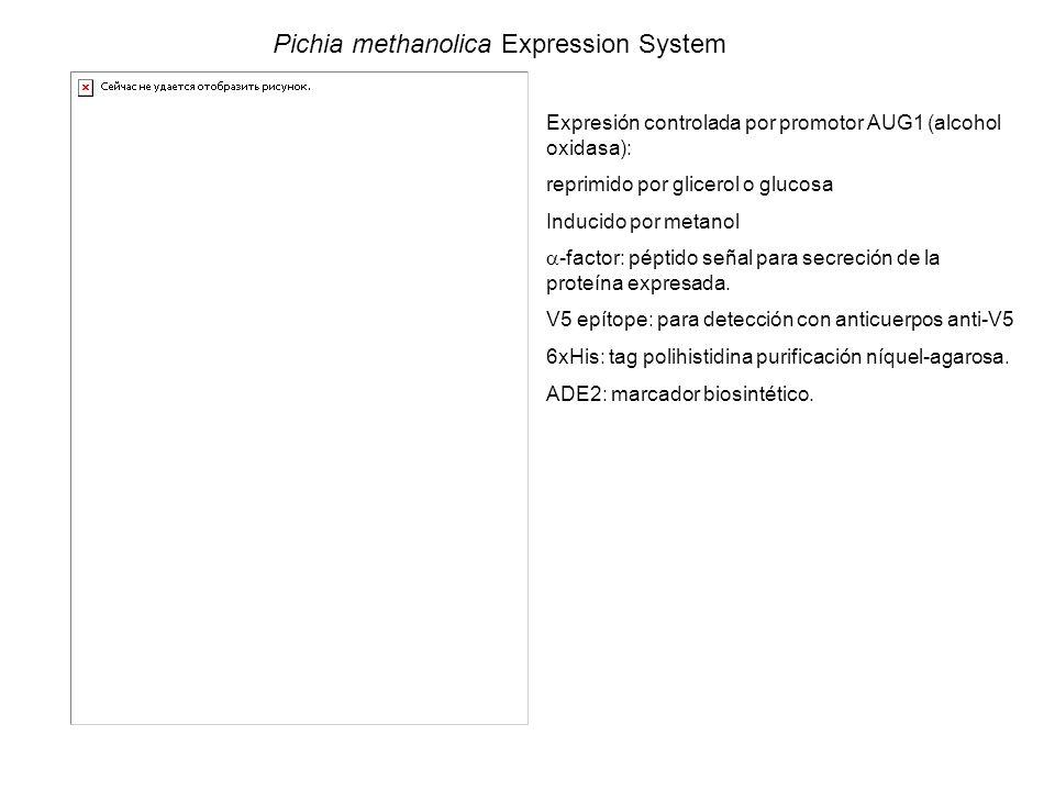 Pichia methanolica Expression System Expresión controlada por promotor AUG1 (alcohol oxidasa): reprimido por glicerol o glucosa Inducido por metanol -