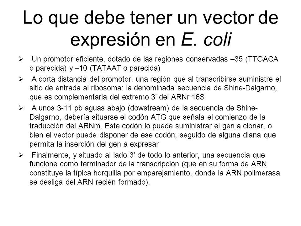 Lo que debe tener un vector de expresión en E. coli Un promotor eficiente, dotado de las regiones conservadas –35 (TTGACA o parecida) y –10 (TATAAT o