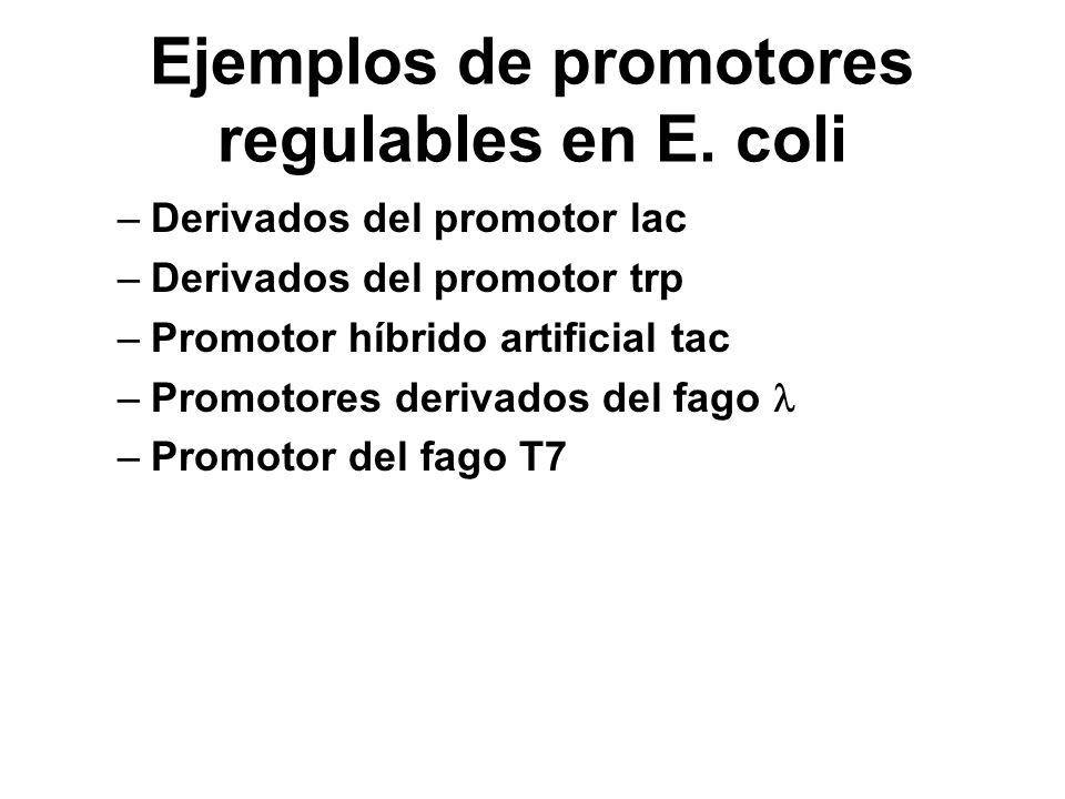 Ejemplos de promotores regulables en E. coli –Derivados del promotor lac –Derivados del promotor trp –Promotor híbrido artificial tac –Promotores deri