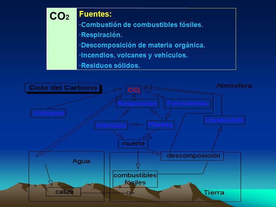 Fuentes: ·Las termitas son productores importantes de metano en tanto que consumen madera y liberan metano en el proceso de digestión.