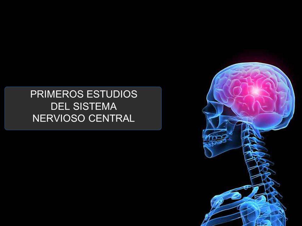 SISTEMA NERVIOSO CENTRAL ESTUDIOS PRECURSORES DEL