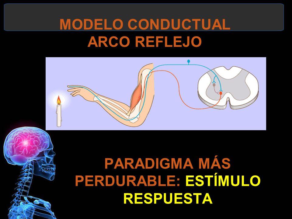 MODELO CONDUCTUAL ARCO REFLEJO PARADIGMA MÁS PERDURABLE: ESTÍMULO RESPUESTA
