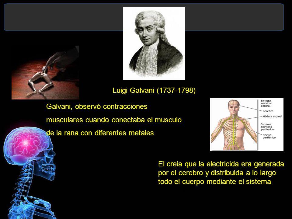 Galvani, observó contracciones musculares cuando conectaba el musculo de la rana con diferentes metales Luigi Galvani (1737-1798) El creia que la electricida era generada por el cerebro y distribuida a lo largo todo el cuerpo mediante el sistema nervioso