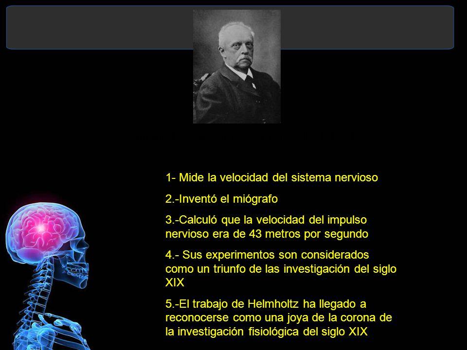 Hermann Ludwing von Helmholtz (1821-1894) 1- Mide la velocidad del sistema nervioso 2.-Inventó el miógrafo 3.-Calculó que la velocidad del impulso nervioso era de 43 metros por segundo 4.- Sus experimentos son considerados como un triunfo de las investigación del siglo XIX 5.-El trabajo de Helmholtz ha llegado a reconocerse como una joya de la corona de la investigación fisiológica del siglo XIX