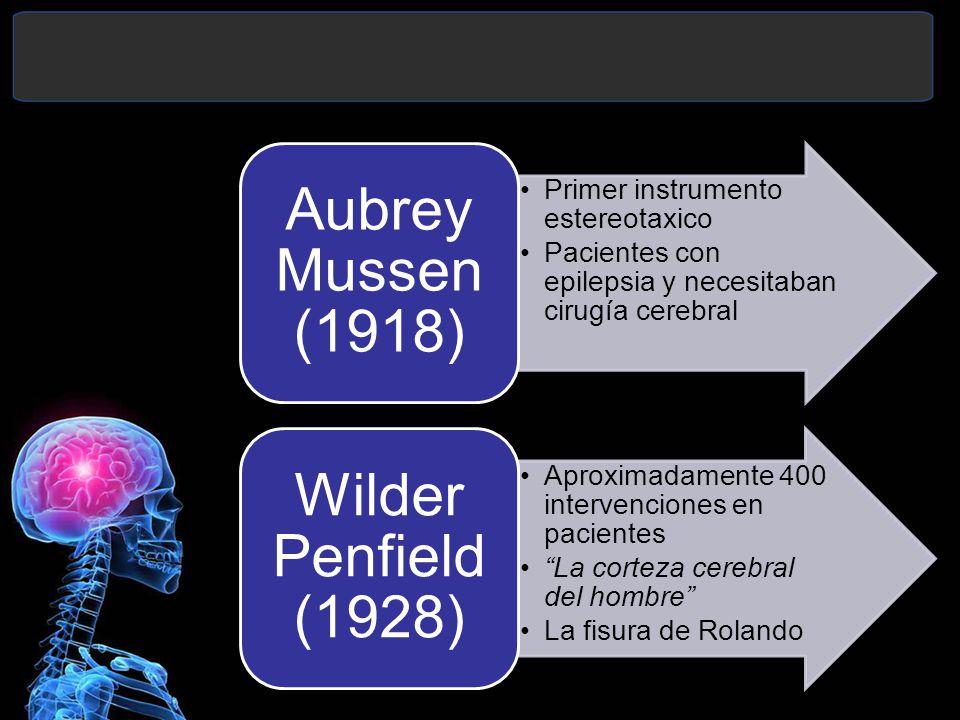 Primer instrumento estereotaxico Pacientes con epilepsia y necesitaban cirugía cerebral Aubrey Mussen (1918) Aproximadamente 400 intervenciones en pacientes La corteza cerebral del hombre La fisura de Rolando Wilder Penfield (1928)